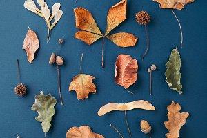 Autumn pattern on  blue