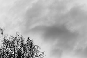 silhouette of a raven on top of the
