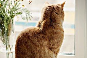 red cat sitting on the windowsill, l