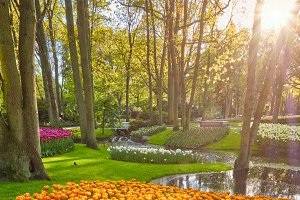 Keukenhof flower garden. Lisse, the