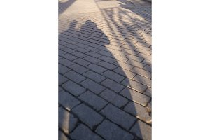 Shadow on the pavement. Street