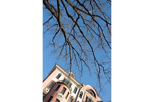 Bare Tree branches over blue sky and