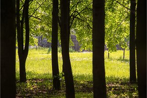 Spring meadow with big trees as