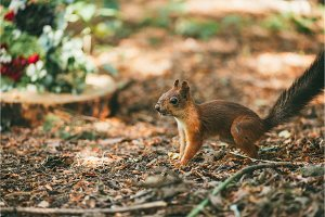 squirrel in the forest via