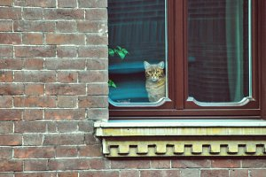 red cat in the window