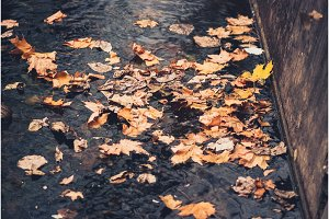 autumn yellow mapple leaves in water