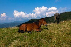 horse pasture in the mountains