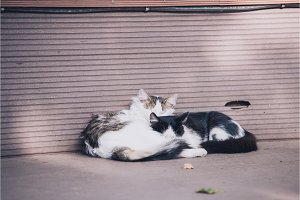 two cats laying on eatch other near