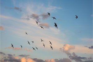 Flock of birds flying across a fiery