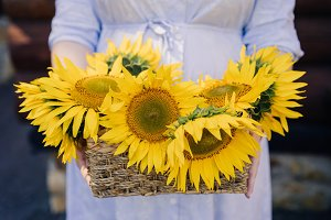 basket with sunflowers in the hands