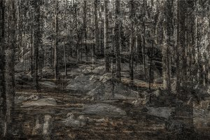 Multiple exposure forest