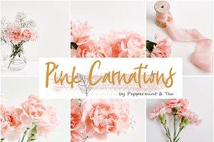 Pink Carnations Bundle