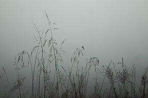 foggy summer morning