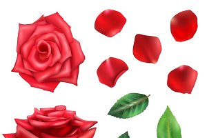 Red rose flower petals and leaves