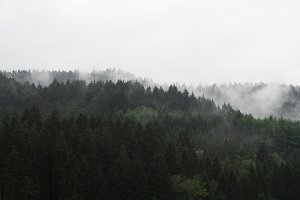 Misty dark forest