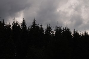 Black forest under a dark sky