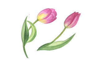 Pink tulip PNG watercolor design set