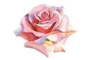 Pink roses realistic PNG watercolor