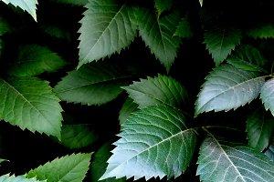 greenery, green jagged leaves