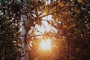 Autumn Leaves Sun Flare