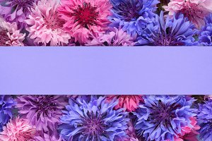 Background with cornflowers