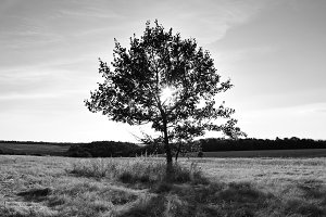 Black and white landscape with tree