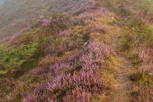 Misty morning dew on mountain meadow