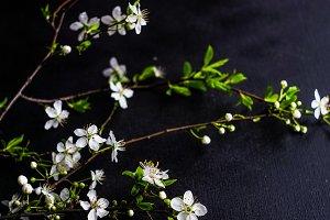 Floral card concept