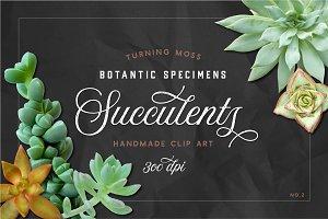 Succulents - Real Botanic Specimens