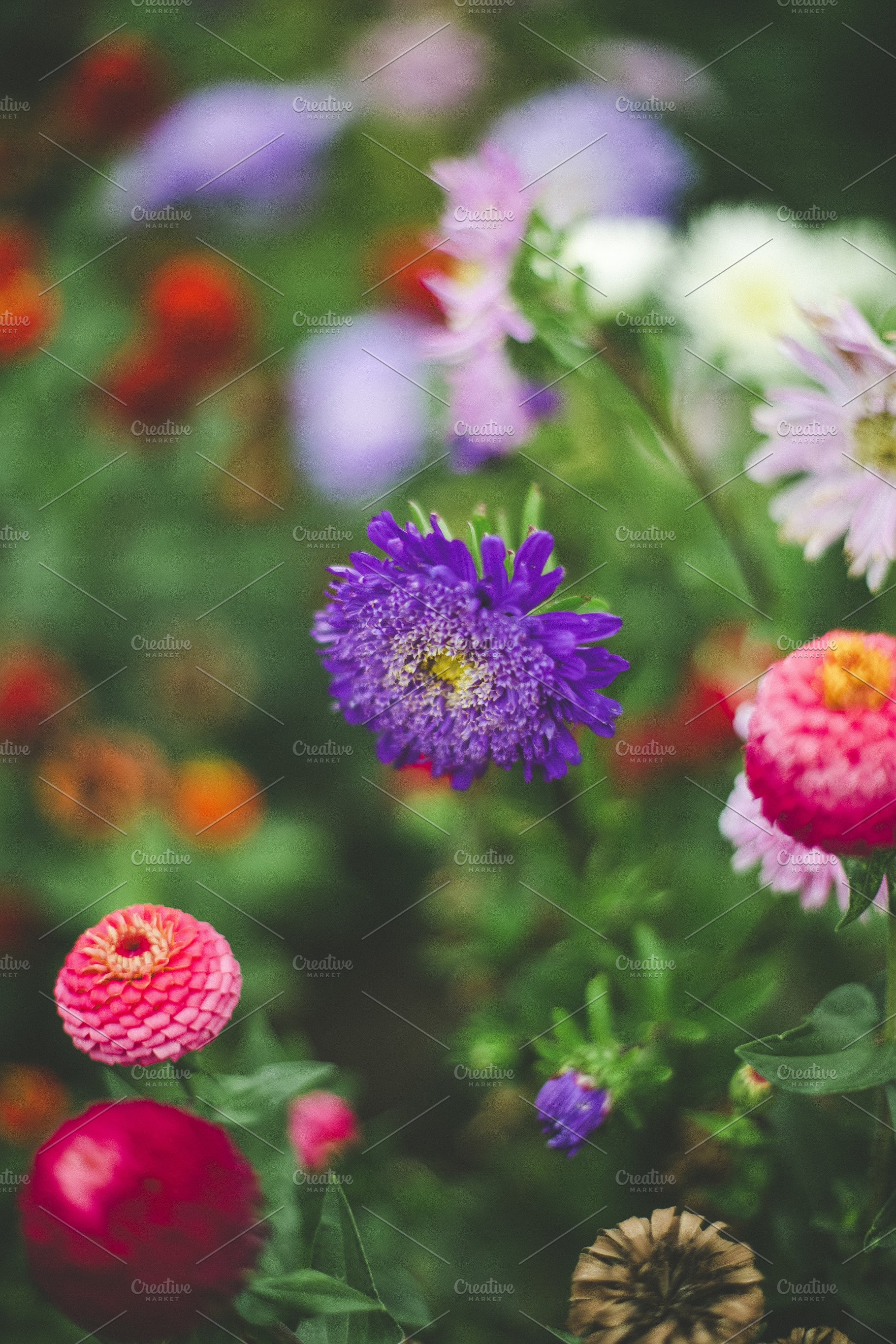 Colorful Spring Flowers Nature Photos Creative Market Pro