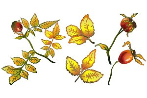 Vector autumn yellow rose hip plant