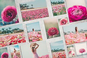 Dreamy Flower Fields Photo Bundle