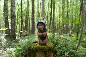 A dog,  terrier in the forest.