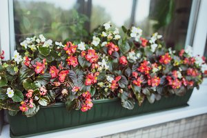 Colourful Flowers on the window