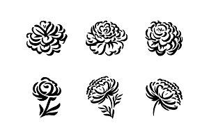 Peony flower graphic illustration