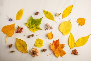 Flat lay of autumn leaves