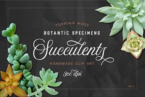 Succulents - Real Botanic Specimens