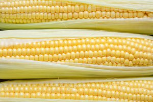 Background of sweet corn on cobs.