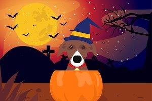 Dog suprise pumpkin halloween