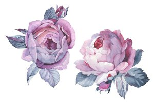 Two pink roses PNG watercolor set