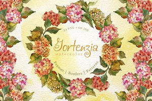 Gortenzia PNG watercolor flower set