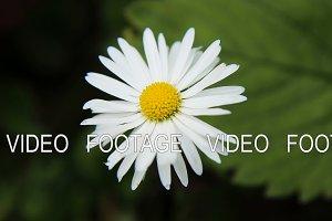 Beautiful white wildflower.
