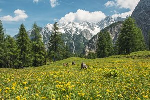 Meadows under snowy mountains