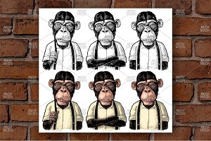 Monkey businessman in the shirt