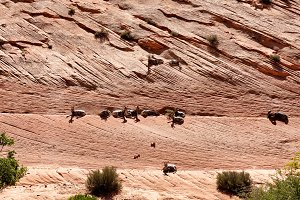 Grand Canyon with bighorn sheep
