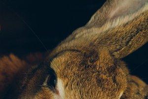 Bunny Rabbit #1