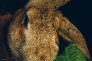 Bunny Rabbit #2