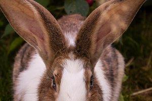 Bunny Rabbit #3