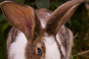 Bunny Rabbit #4