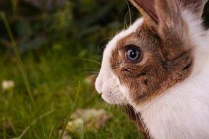 Bunny Rabbit #5